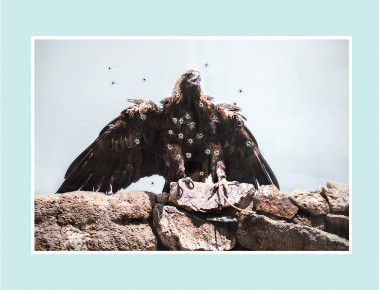 Patricio Robles Gil, Aquila chrysaetos; acribillada, 2015