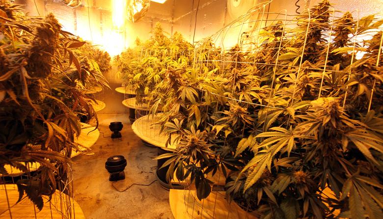 Referendo sobre el uso recreativo y médico de la marihuana en Estados Unidos